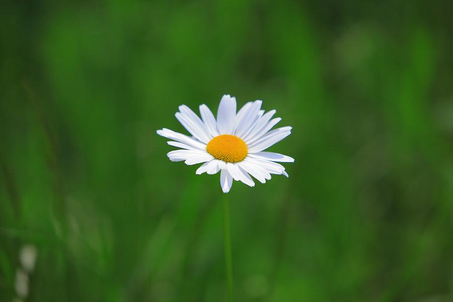 용평의 아름다운 봄풍경, 봄꽃, 봄의 향기~