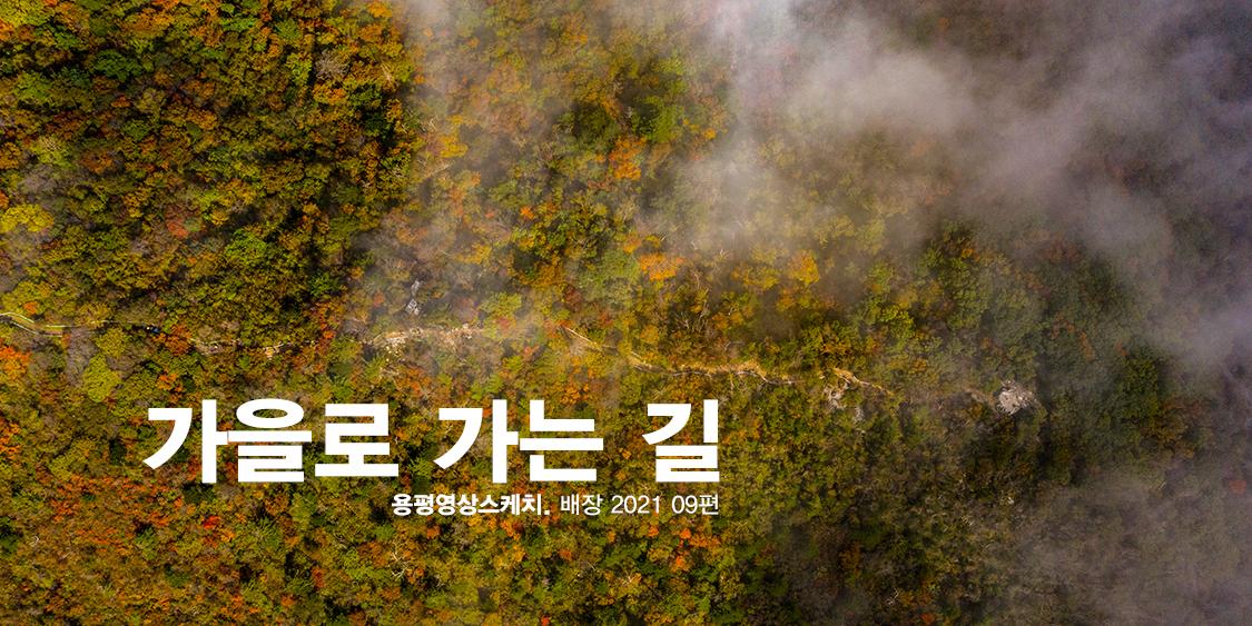 가을로 가는 길 _ 용평영상스케치. 배장 2021 09편