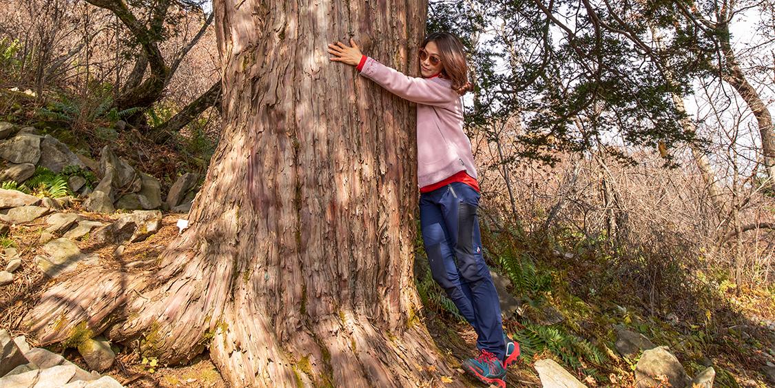 발왕산 주목치유숲의 가을 _ 용평포토스케치. 배장 2021 92편