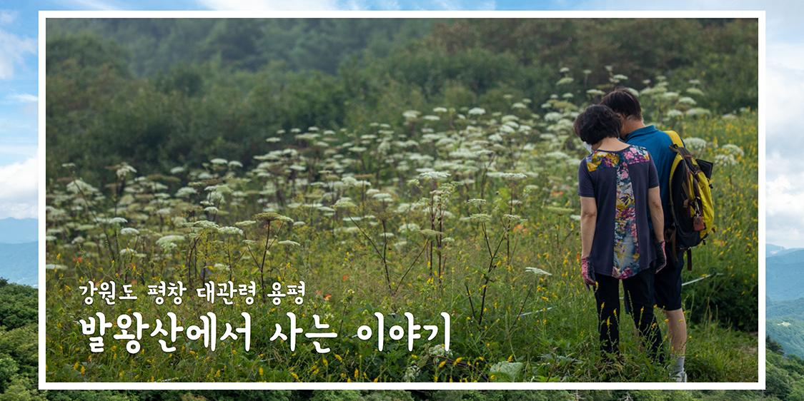 발왕산에서 사는 이야기 _ 용평영상스케치. 배장 2122 09편