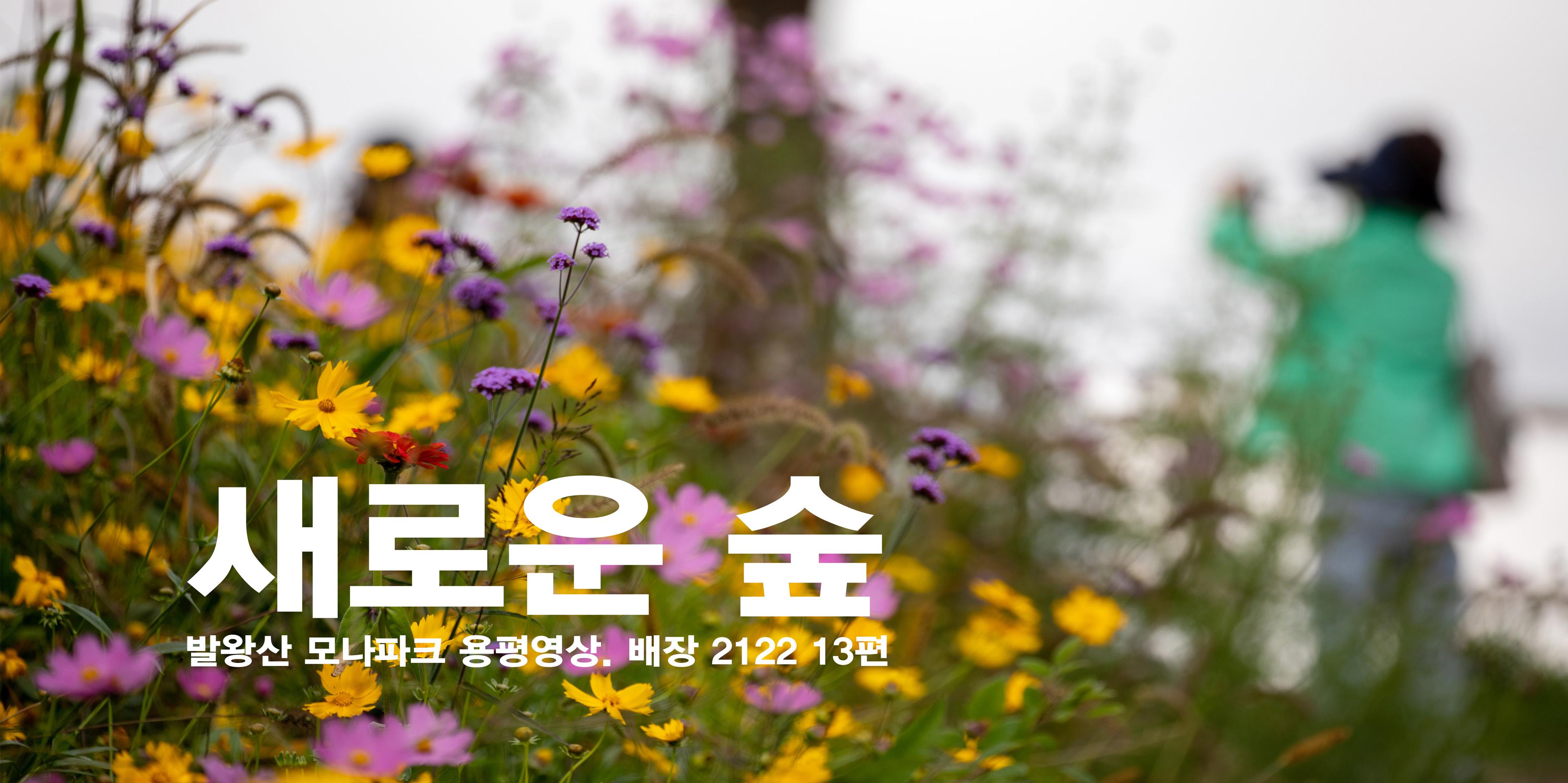 애니포레(용평알파카농장+독일가문비치유숲길) _ 용평영상.배장 2122 13편