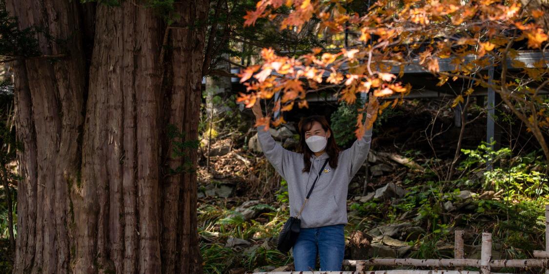 가을 단풍이 완연한 강원도 평창 대관령 발왕산 모나파크 용평포토스케치. 배장 2122 63편