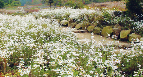 Image of Korean Native Plant Center